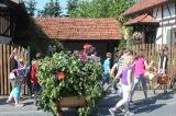 Laubmännchen 2012