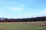Fruehling in Wilhelmsdorf 2013_1